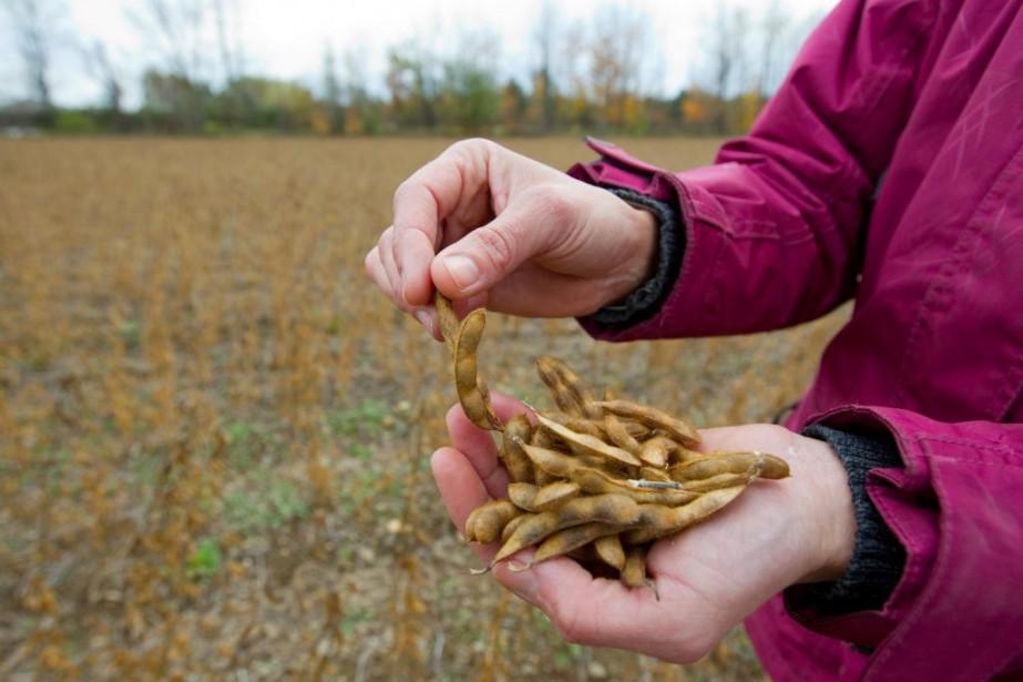 La production québécoise de soya représente 15% de... (PHOTO ALAIN ROBERGE, ARCHIVES LA PRESSE)
