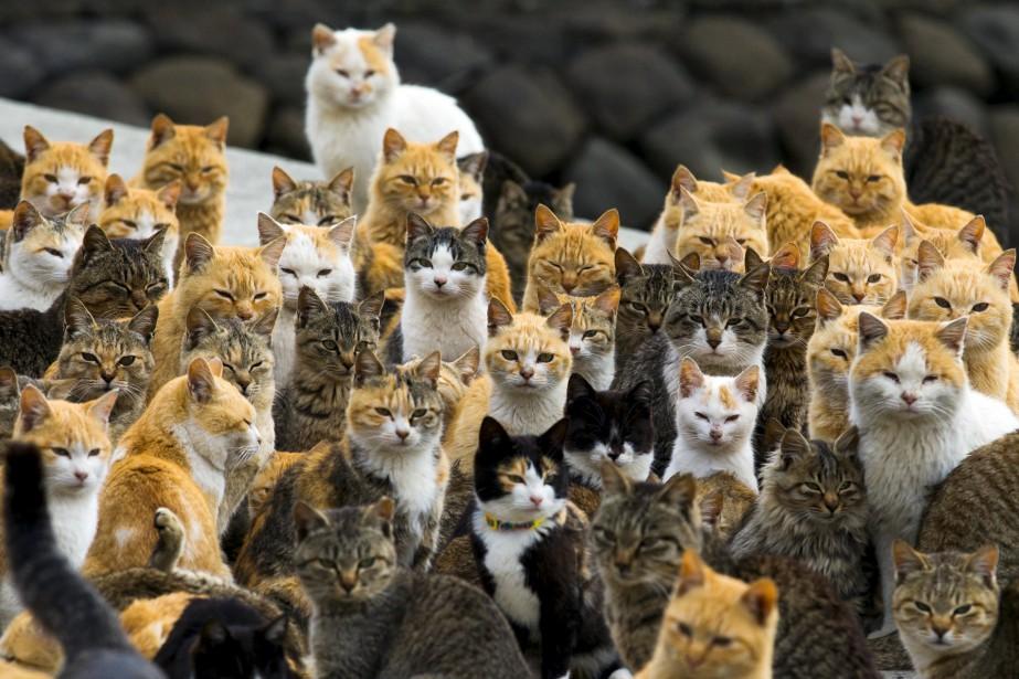 Une p tition veut renforcer la protection des chats for Protection fenetre pour chat