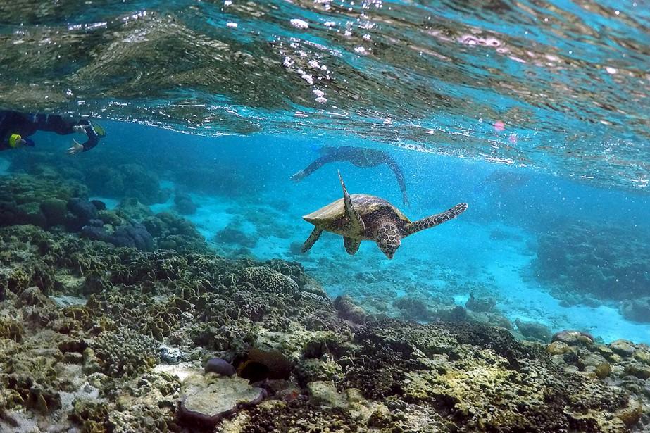 Ces canicules peuvent provoquer un blanchiment des coraux,... (David Gray, REUTERS)
