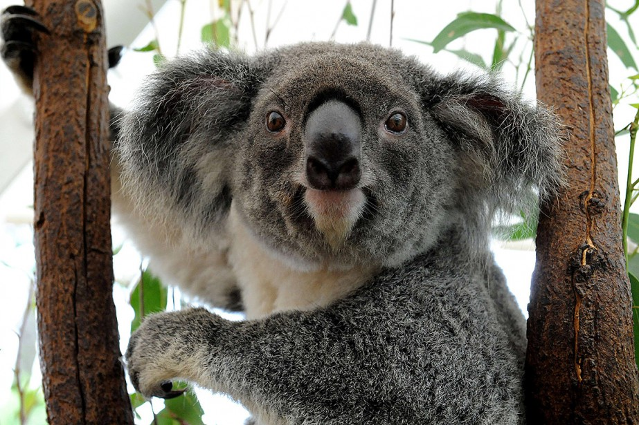 Le programme de 45 millions de dollars australiens... (AFP)