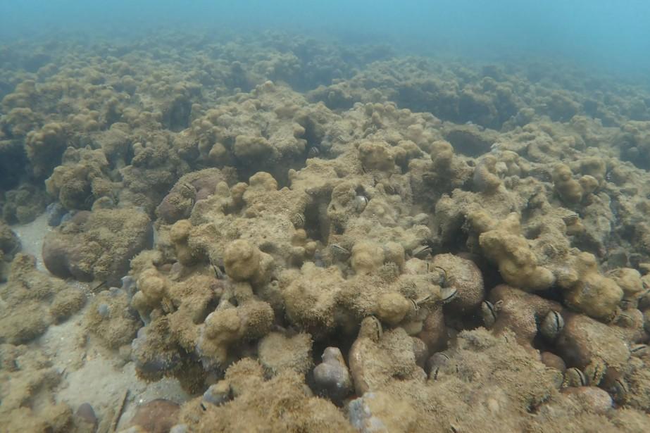 À présent, 1,4% du lagon qui s'étend sur... (Photo archives Agence France-Presse)