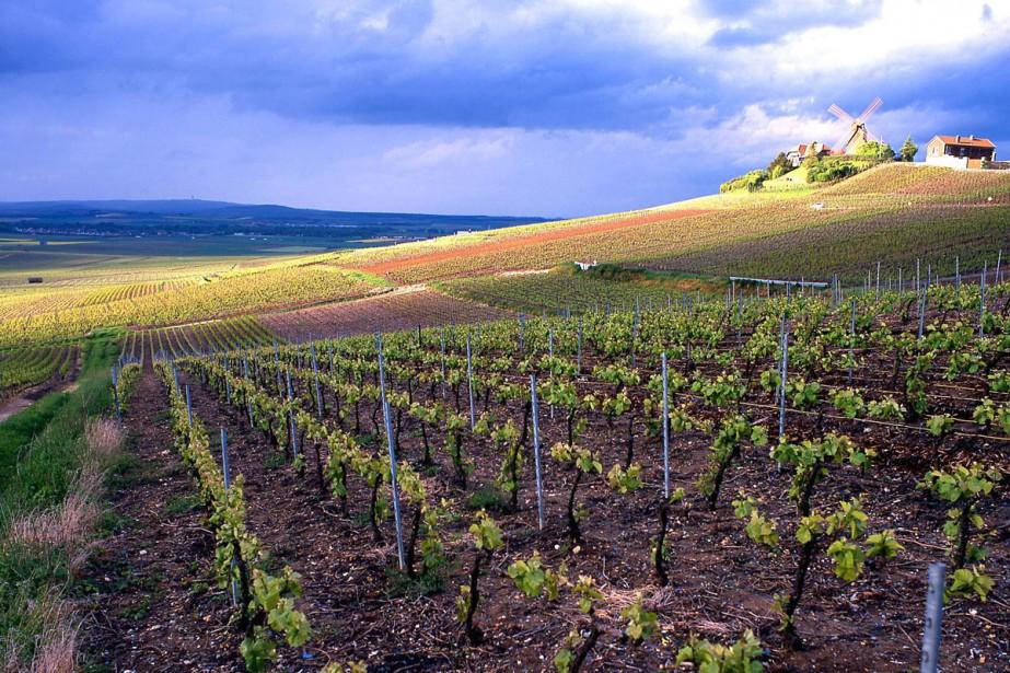 Un vignoble de la région de Champagne, à... (Photo archives AP)