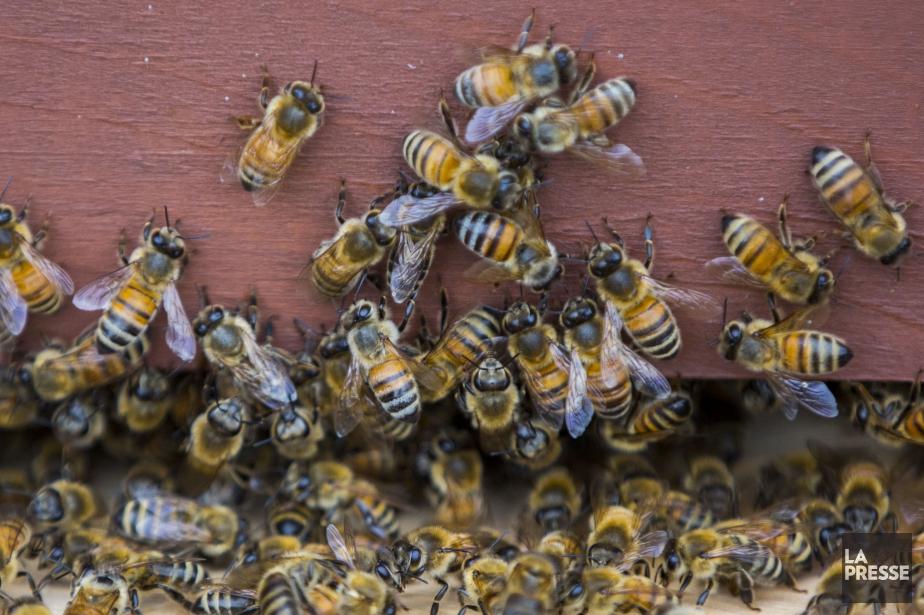 L'Autorité européenne de sécurité des aliments a confirmé,... (PHOTO OLIVIER JEAN, ARCHIVES LA PRESSE)