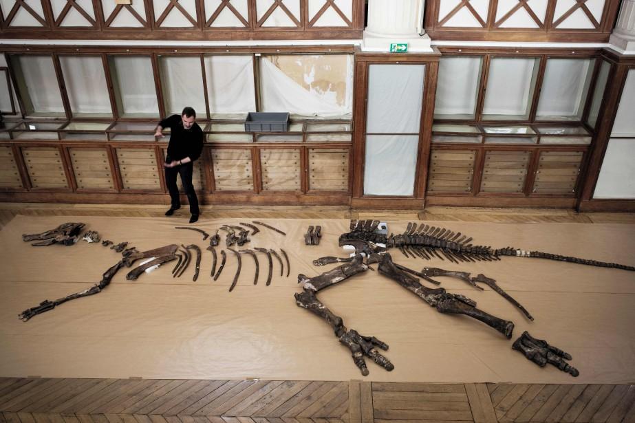 Ronan Allain près d'un squelette d'un edmontosaurus regalis.... (Photo PHILIPPE LOPEZ, Agence France-Presse)