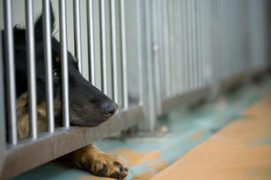 La SPCA de Montréal a accueilli 10 407... (Photo David Boily, Archives La Presse)