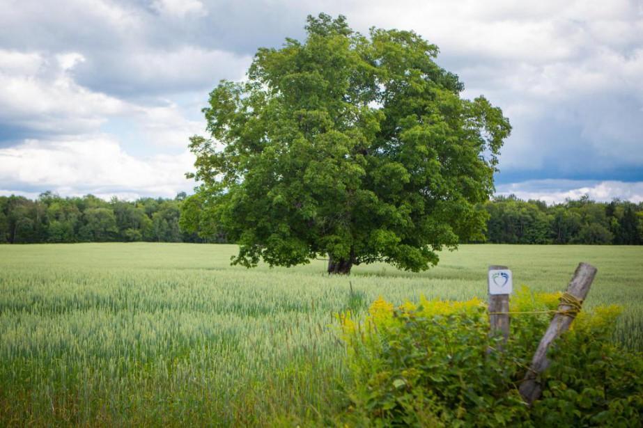 À la recherche de l\'arbre idéal