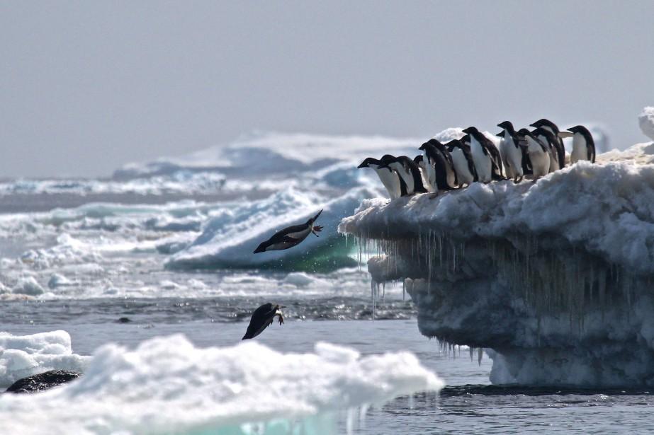Depuis cinq ans, les glaces fondent à un... (Photo Rachael Herman, archives Agence France-Presse)