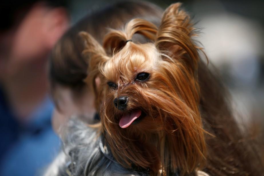Empêché de voir sa chienne depuis sa séparation... (Photo archives Reuters)