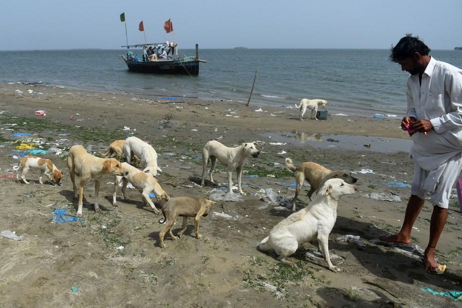 Lorsque AbdulAziz arrive, les chiens courent autour de... (Photo RIZWAN TABASSUM, Agence France-Presse)