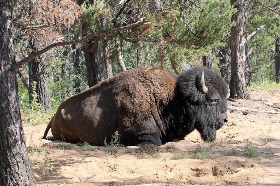 Le parc national Wood Buffalo est le seul... (Rob Belanger, archives PC)