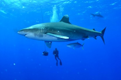 Image tirée de l'émission Le plus dangereux des... (Photo fournie par Canal D)