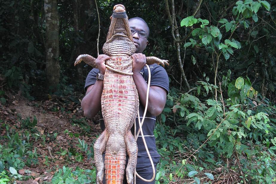Sur cette photo de 2010, un chercheur tient... (Olivier TESTA, archives AFP)