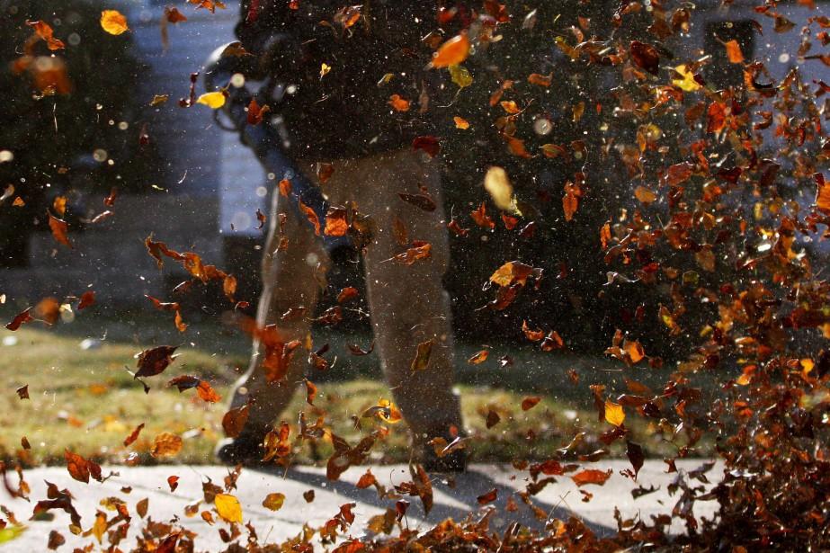 Du vent, les souffleurs à feuilles. Beaconsfield interdit... (Photo archives PC)