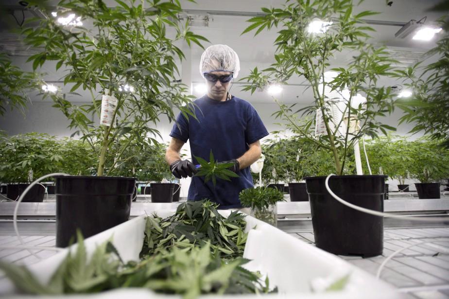 Canopy Growth a indiqué avoir émis près de... (Photo Sean Kilpatrick, La Presse canadienne)