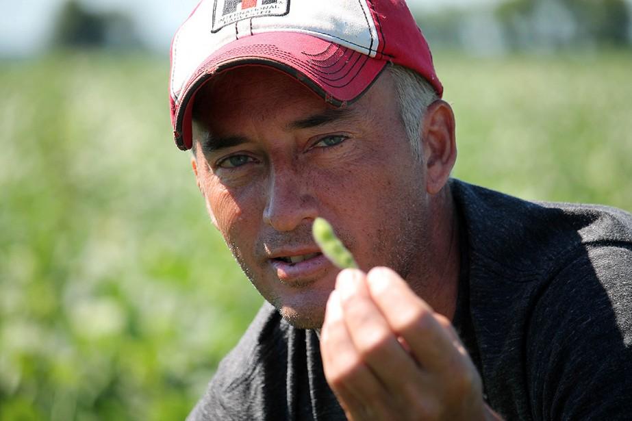 Comme d'autres cultivateurs de l'Illinois, premier producteur national... (Derek R. HENKLE, AFP)