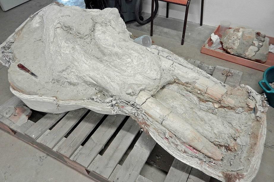«Le crâne complet a été retiré du terrain... (Muséum d'histoire naturelle de Toulouse VIA AFP)