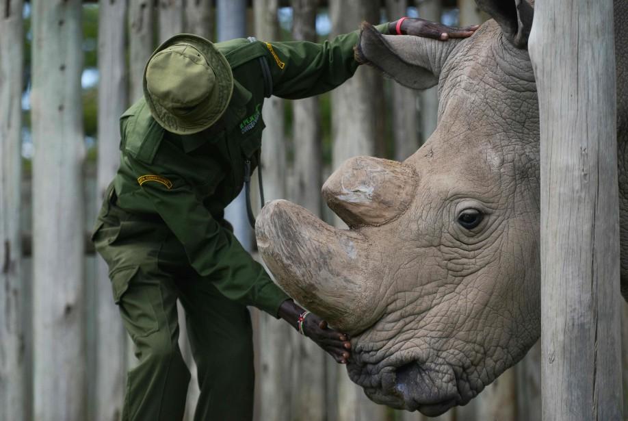 Le déplacement vers un nouvel habitat d'animaux menacés,... (ARCHIVES AFP)