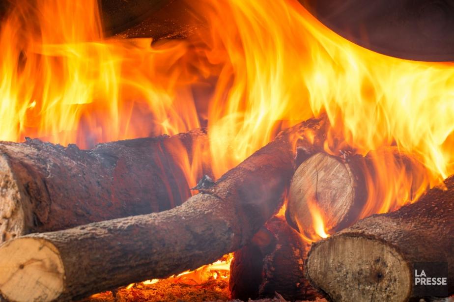 La Société de protection des forêts contre le... (PHOTOTHÈQUE LA PRESSE)