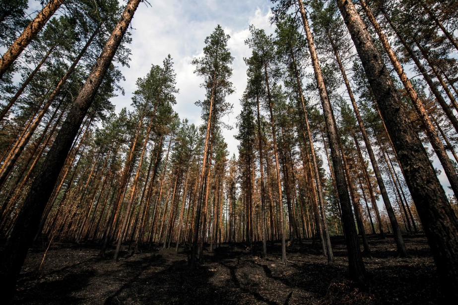 La forêt victime d'un feu près de Korkskgrogen.... (Photo Jonathan Nackstrand, AFP)