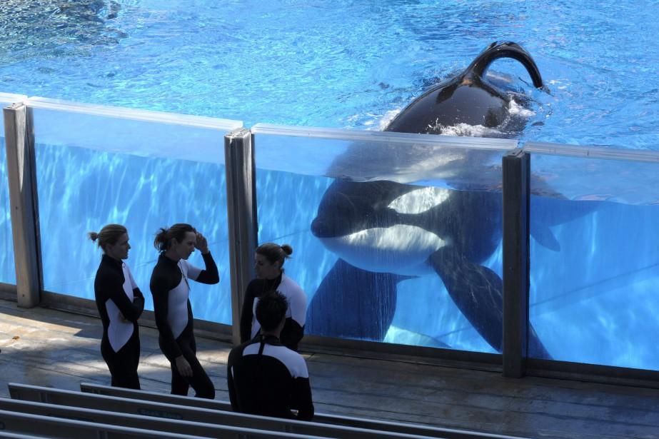 Fondé en 1959 aux États-Unis, SeaWorld Entertainment a... (Photo archives, AP)