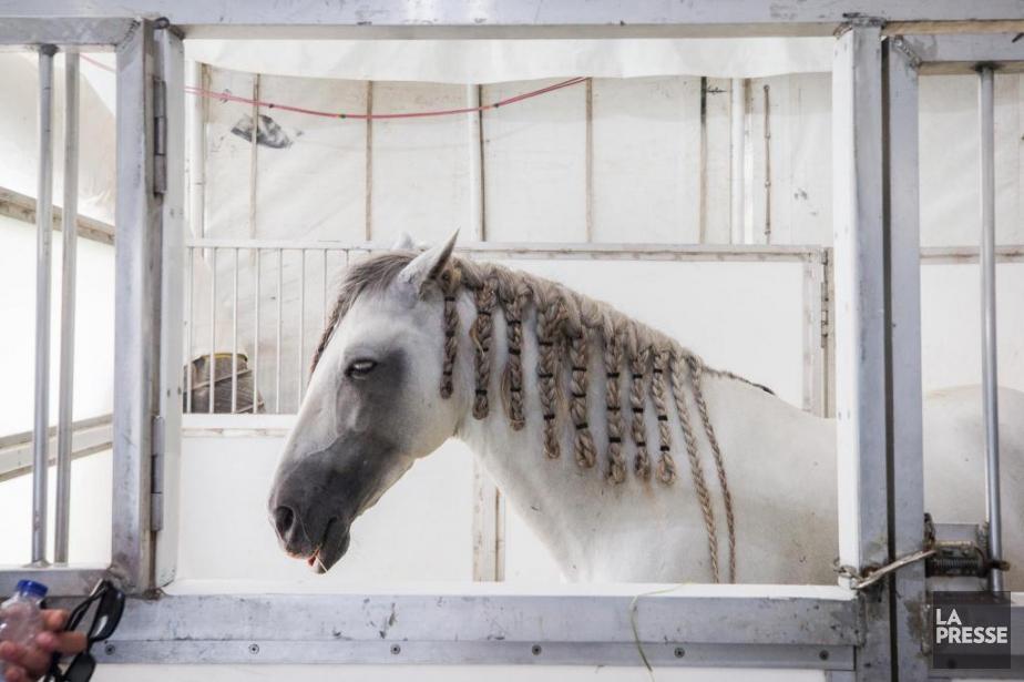 Chaque cheval est présent en moyenne 12 minutes... (PHOTO OLIVIER PONTBRIAND, LA PRESSE)
