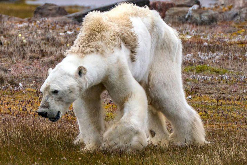 Dans un essai publié à la fin du... (Photo tirée du site du National Geographic)
