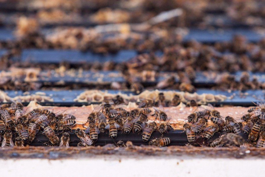 Ce type de pesticide est particulièrement nocif pour... (photo Jeff Bassett, Archives PC)