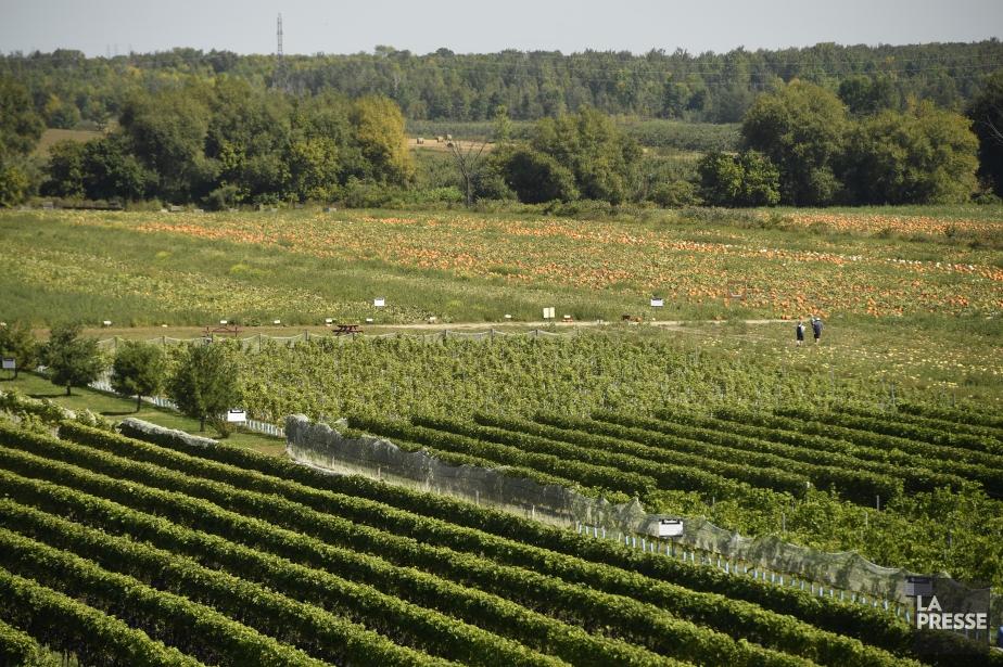 Ottawa accorde trois ans aux agriculteurs pour déterminer... (PHOTO BERNARD BRAULT, archives LA PRESSE)