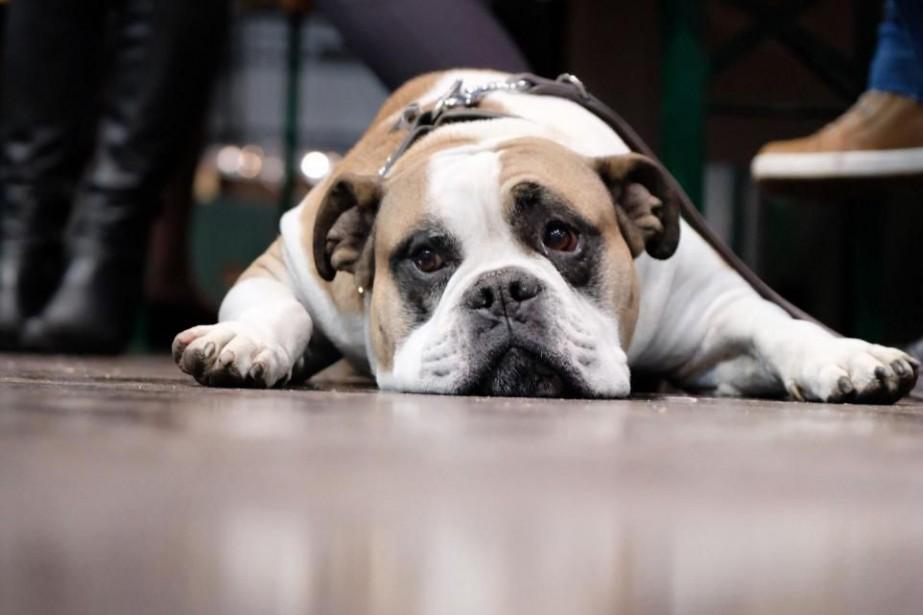 Comment choisir le chien qui nous convient?... (Photo Sebastian Willnow, archives Agence France-Presse)