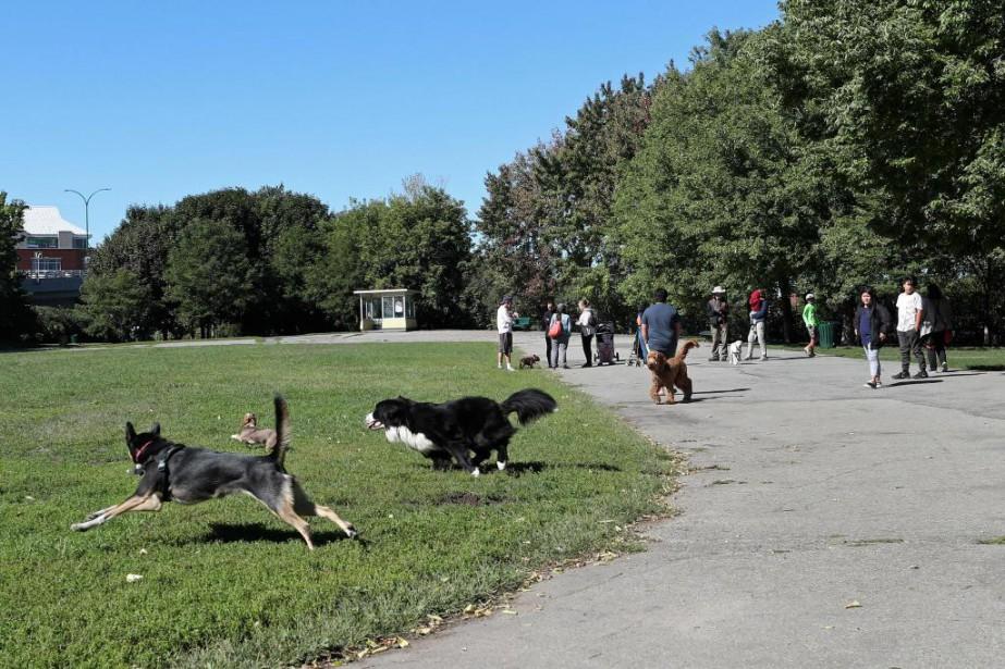 L'Association du parc canin d'Outremont (APCO) estime que... (Photo Robert Skinner, La Presse)