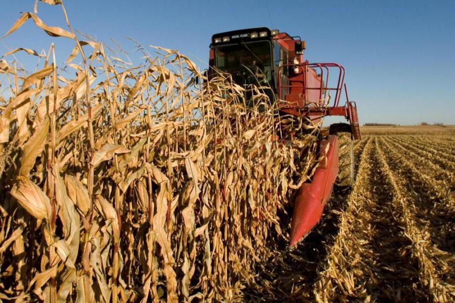 L'Union des producteurs agricoles demandera aujourd'hui aux différents... (Photo Robert Skinner, Archives La Presse)