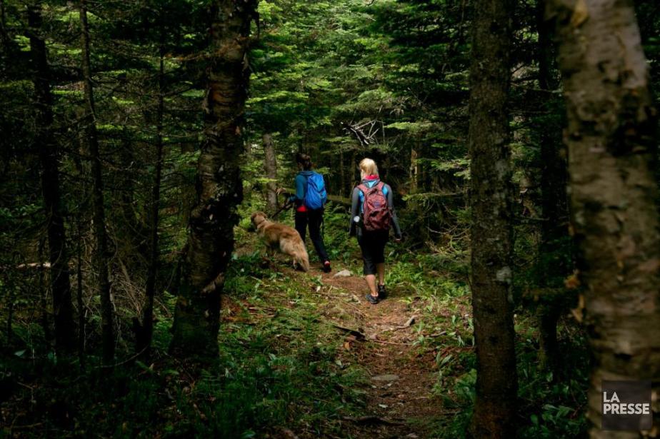 Les deux tiers des Québécois ont pratiqué au... (Photo DavidBoily, La Presse)