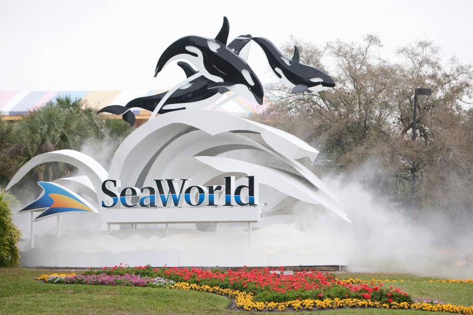 SeaWorld auraitminimisé auprès des investisseurs l'impact du documentaire... (Photo Matt Stroshane, Archives AFP)