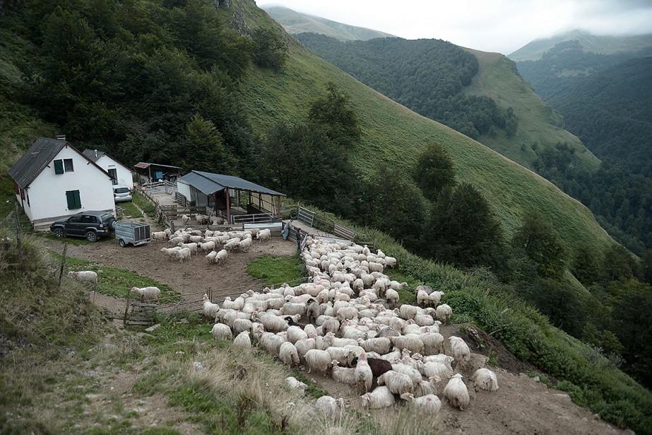 L'introduction d'ours suscite l'opposition d'une partie des éleveurs... (Photo IROZ GAIZKA, archives AFP)