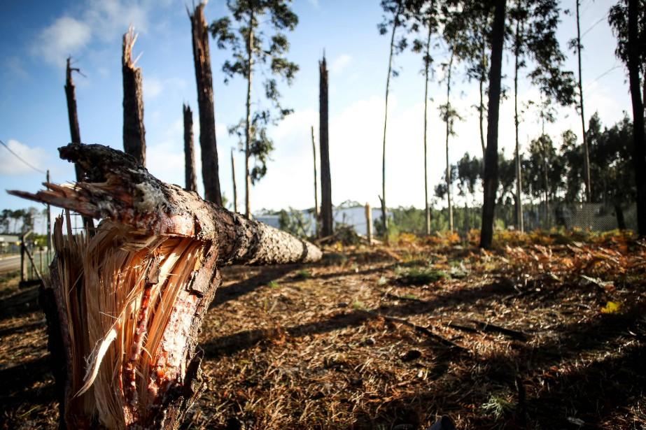Selon le dernier bilan officiel, ces intempéries ont... (Photo Carlos Costa, AFP)