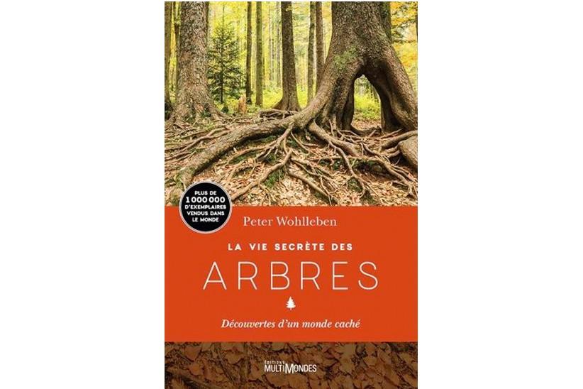 La vie secrète des arbres... (Image fournie par les Éditions MultiMondes)