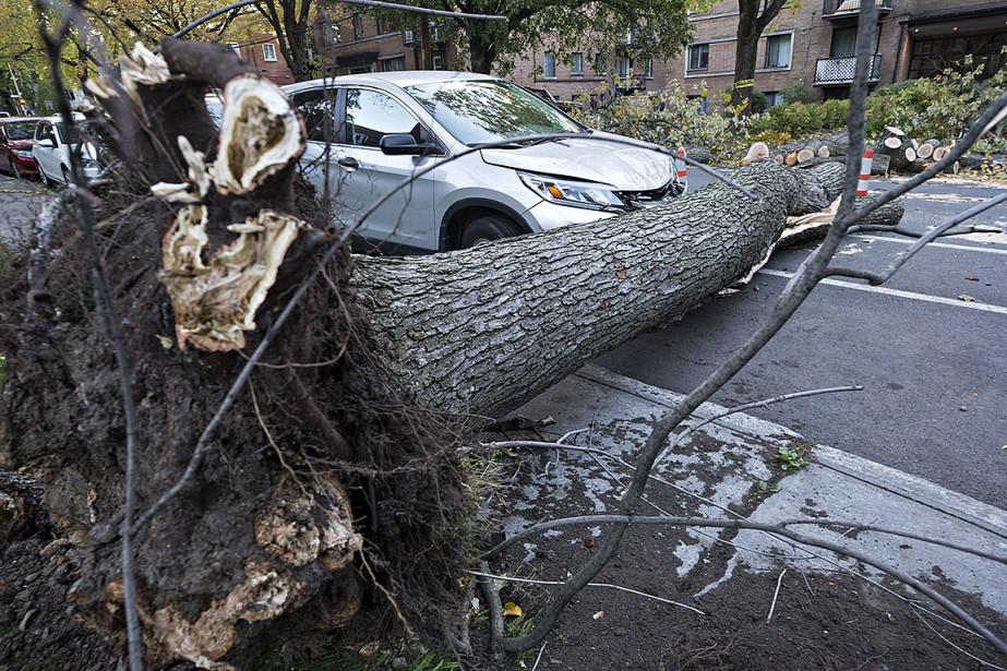 Des branches d'arbres brisées et des morceaux de... (Patrick Sansfaçon, La Presse)