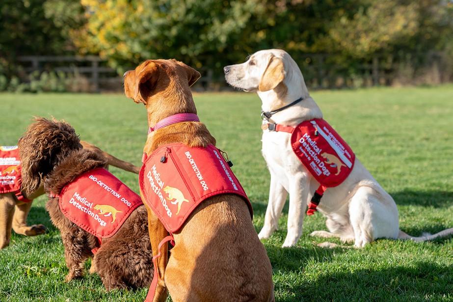 Des chiens de l'ONG Medical Detection Dogs.... (Photo MATTHEW STOCK, REUTERS)
