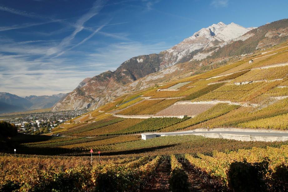 Un vignoble de Sion, en Suisse... (Photo DENIS BALIBOUSE, REUTERS)