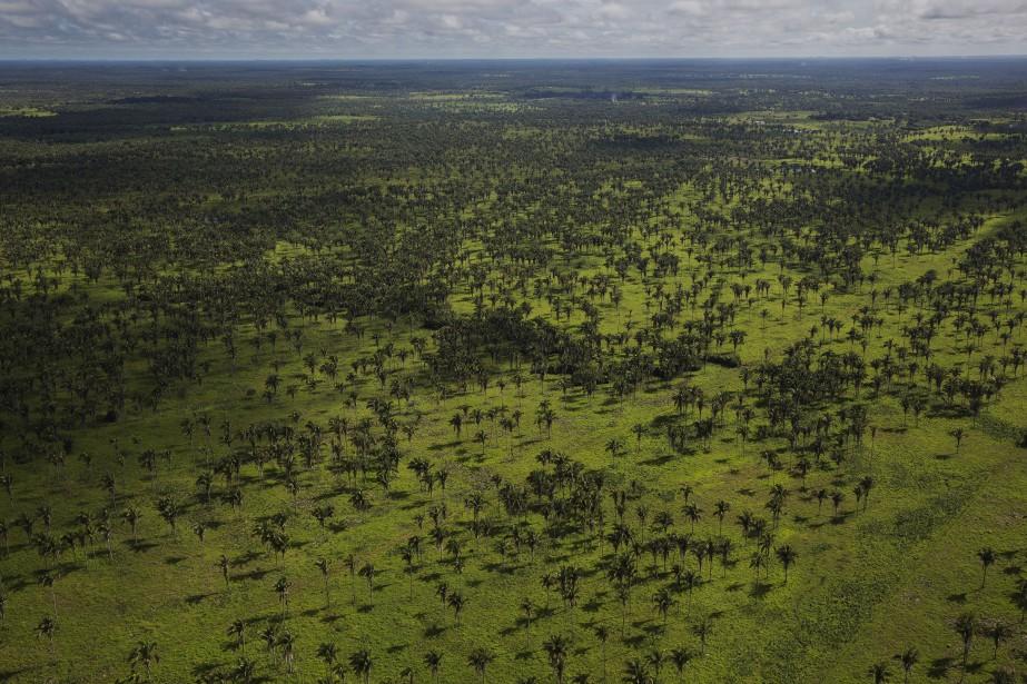 Une zone dégarnie de la forêt amazonienne.... (Photo LALO DE ALMEIDA, archives The New York Times)