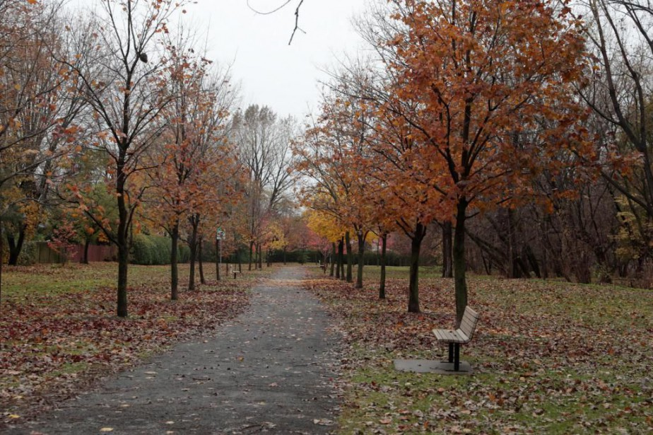 Le dernier bois de Saint-Lambert menacé | Kathleen Lévesque | Grand Montréal