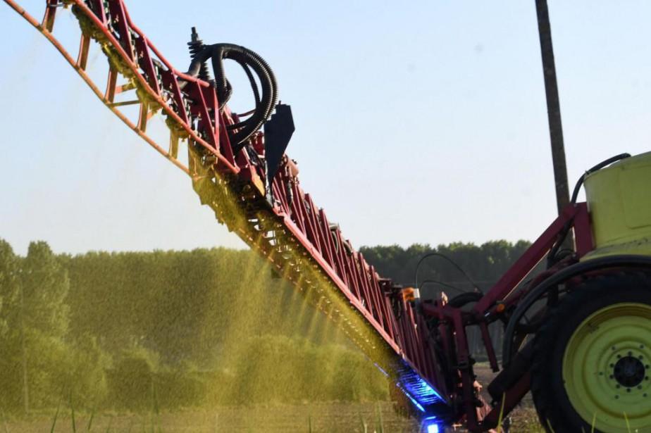 Des études manipulées par Monsanto auraient influencé la... (PHOTOJEAN-FRANCOIS MONIER, ARCHIVES AGENCE FRANCE-PRESSE)