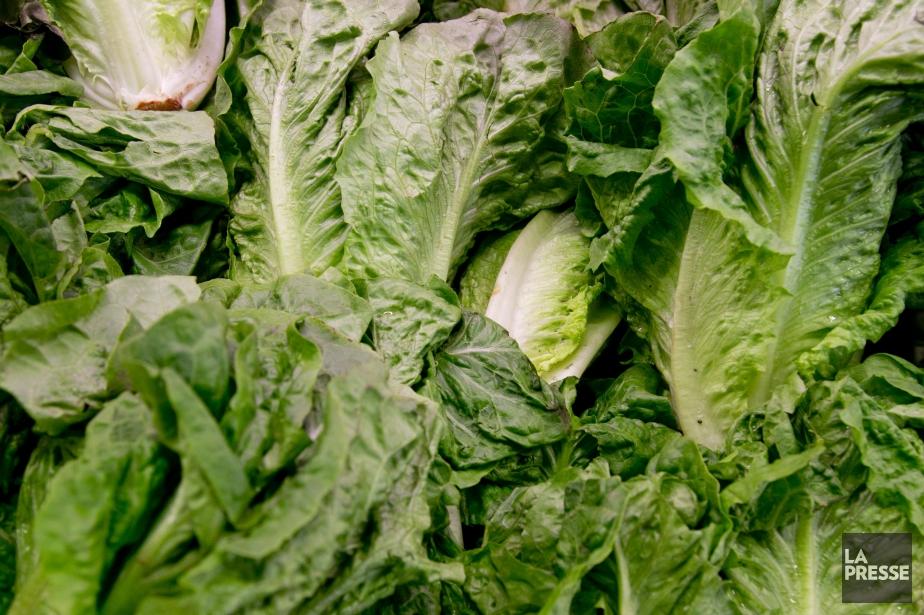 Votre salade pourrait vous réserver de... (Photo David Boily, archives La Presse)