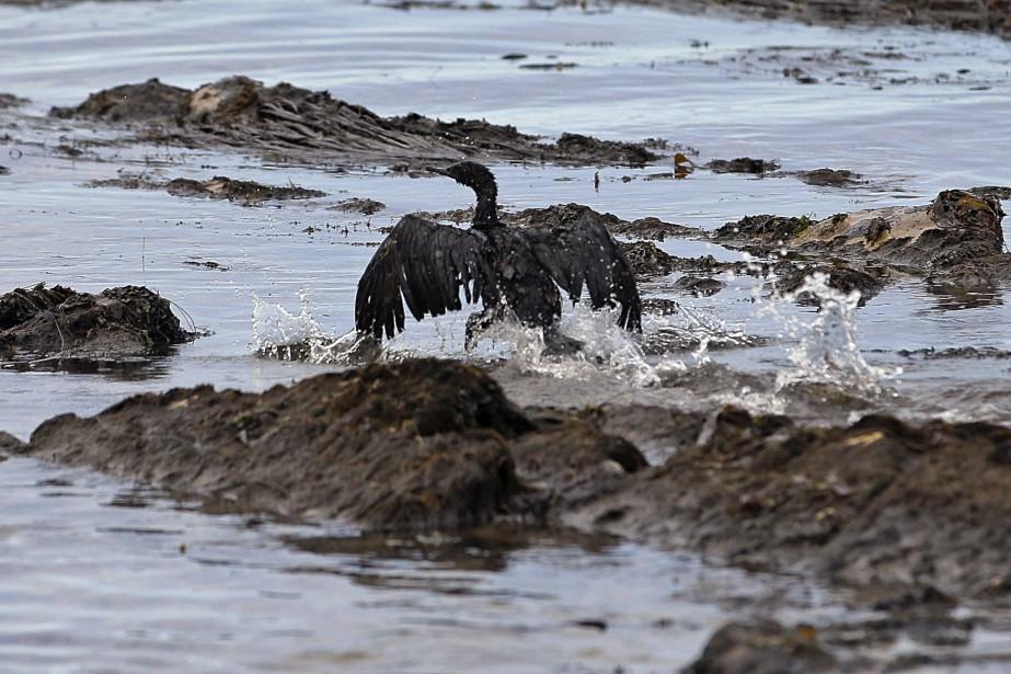 Les experts en oiseaux de mer affirment qu'une... (Photo Jae C. Hong, archives Associated Press)
