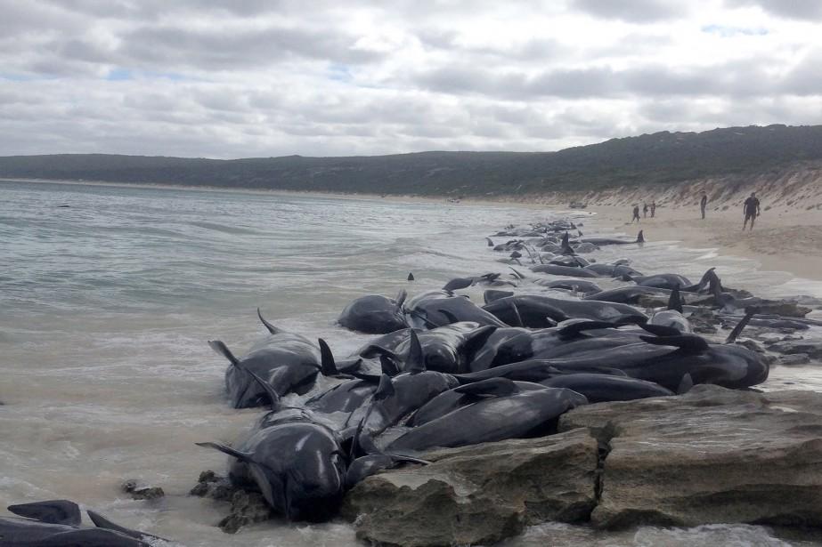Sur les 145 mammifères, la moitié étaient morts... (PHOTO AFP)