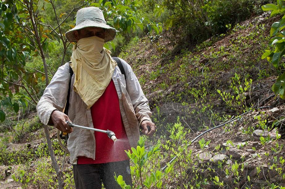 Visage masqué et pulvérisateur sur le dos, un... (Photo WILLIAM WROBLEWSKI, AFP)