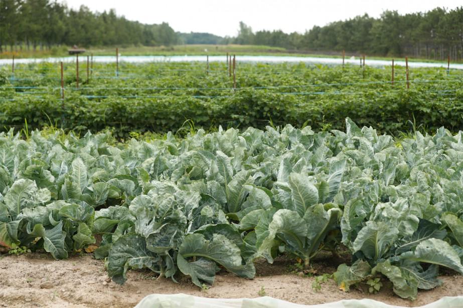 2019 fera la part belle aux légumes et... (Photo Martin Chamberland, Archives La Presse)