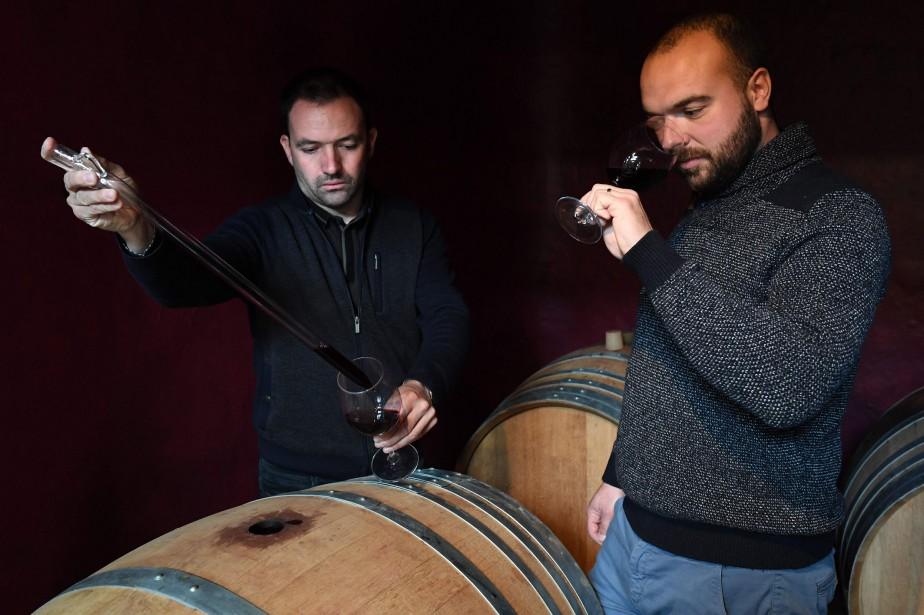 Les viticulteurs Benjamin Coulet et Valentin Goeminne... (Photo PASCAL GUYOT, AFP)