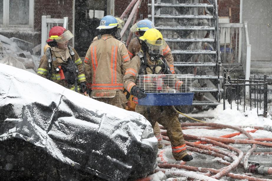 Les pompiers ont sorti un chinchilla et une... (Photo Robert Skinner, La Presse)