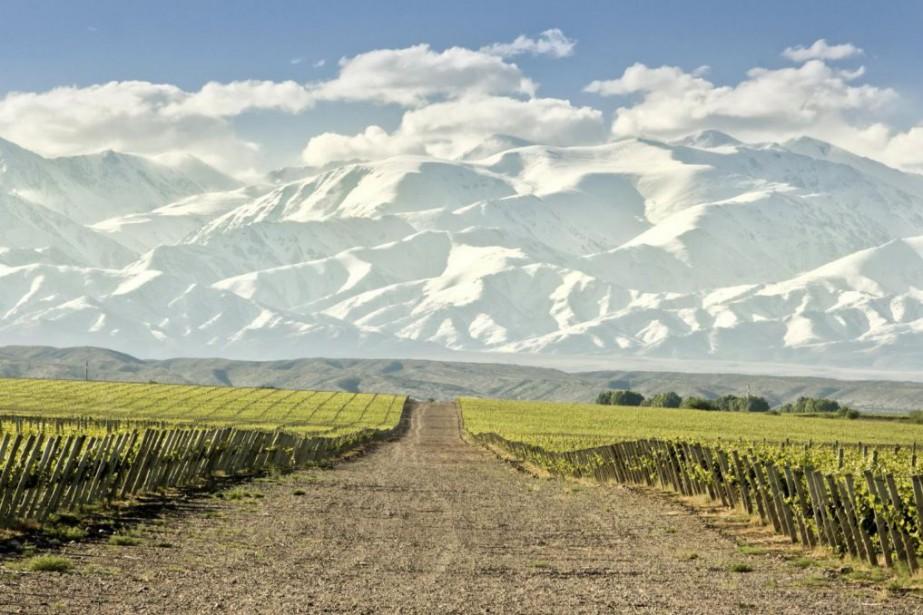 Le vignoble argentin s'étire du nord au sud... (Photo Getty Images)